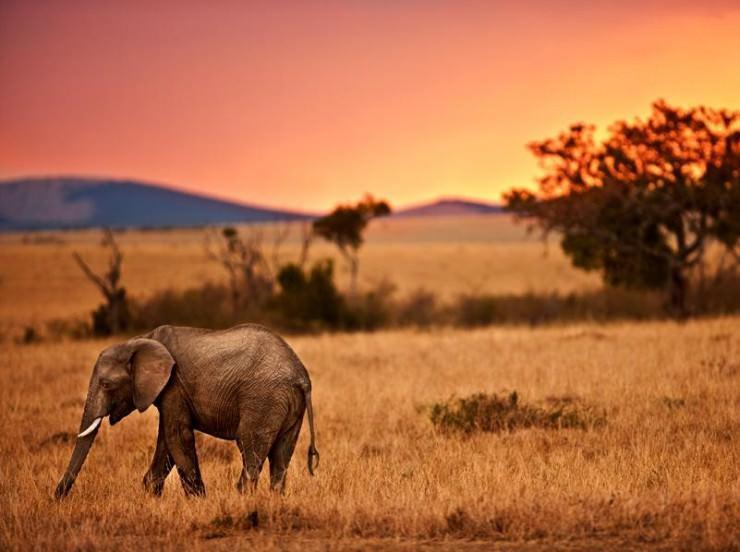 حیات وحش در پارک ملی سرژنتی