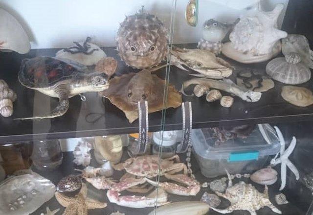 تعریف کار دانشجویی در موزه های دانشگاه مازندران، زندگی در پردیس را در دانشگاه محقق کنیم