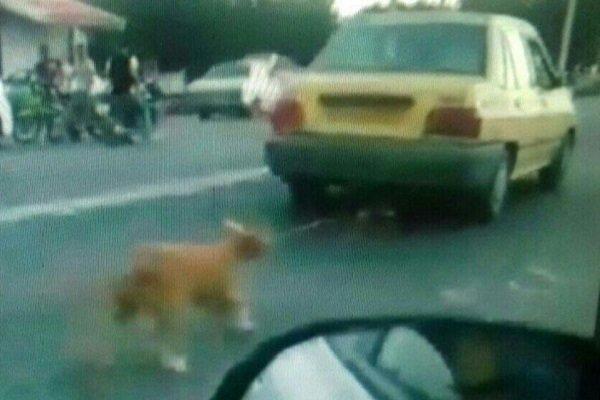 تکرار سگ آزاری در شفت، محیط زیست اقامه دعوی کرد