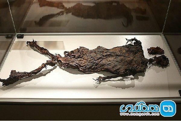 اقبال نمایشگاه آثار تاریخی هلند در ایران