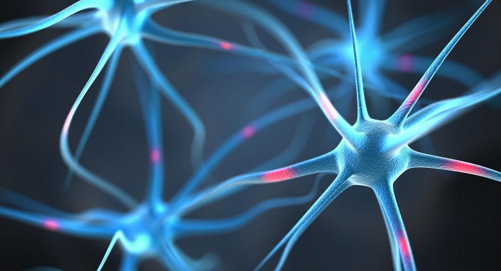 مغز انسان اشکال هندسی 11 بعدی دارد