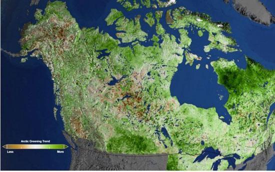 قطب شمال سرسبز می گردد