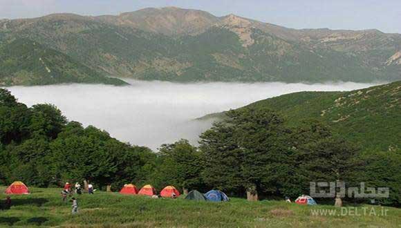 جنگل ابر با درختانی در آغوش ابرها