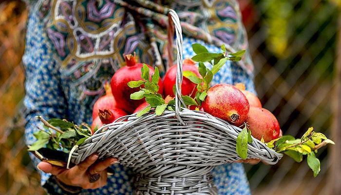 میوه ای که معادل 11 میوه خاصیت دارد!