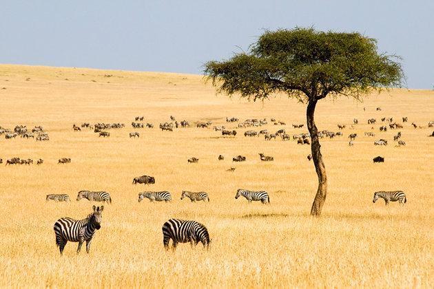 کنیا؛ مقصد دوست داران حیات وحش