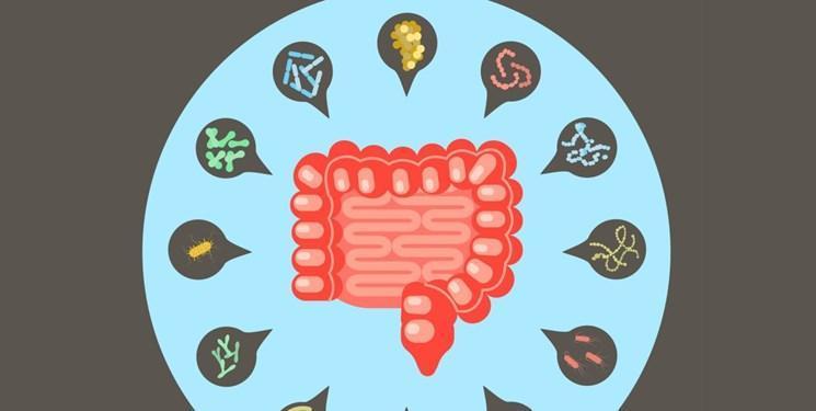 کشف باکتری جدید عامل دیابت در روده