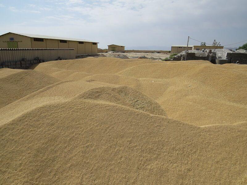خبرنگاران ورود 69 هزار تن گندم به کشور از راه تخلیه مستقیم کشتی به قطار