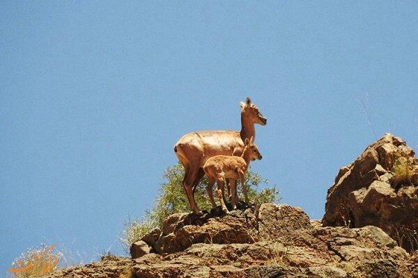 افتتاح اولین مرکز تیمار حیات وحش در منطقه هفتادقله