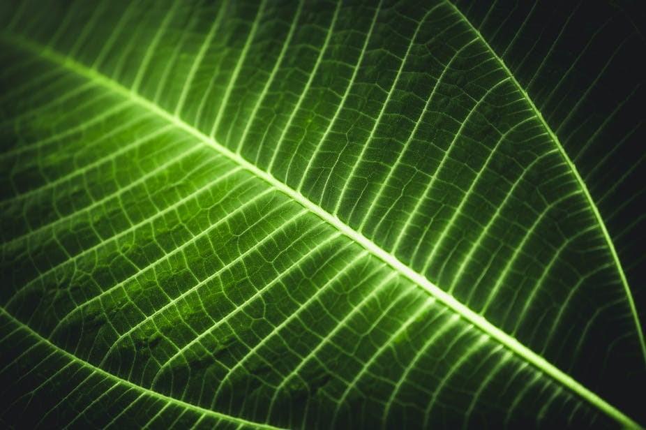 گیاهان افراد گمشده در جنگل را پیدا می کنند